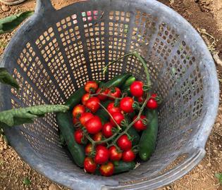 【イスタンブール】オーガニックファームでの野菜摘み体験