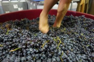 スペインワインの豆知識と一緒に体験したい日本語でのワインツーリズム