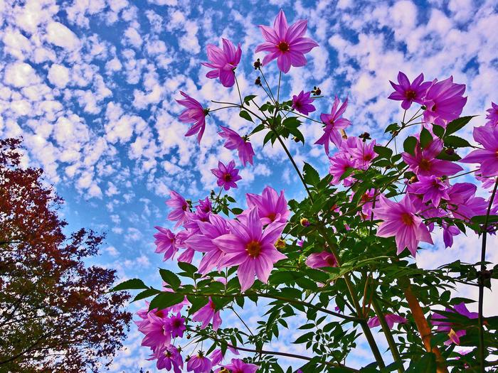 紅葉や黄葉など美しく彩る11月の花7選都内で訪ねるべき花の名所を厳選