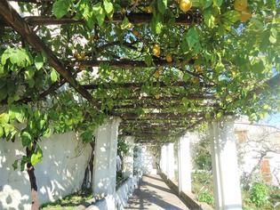ハーブ好き必見!12世紀から続くサレルノのミネルヴァ庭園で癒される