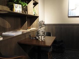 スウェーデン初!猫カフェJava Whiskersオープン