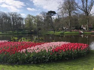 期間限定開園のオランダ・チューリップの楽園「キューケンホフ公園」に行ってきました!