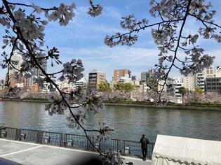 水都大阪川開き!セレモニーとクルーズで!桜舞う水回廊の旅へ