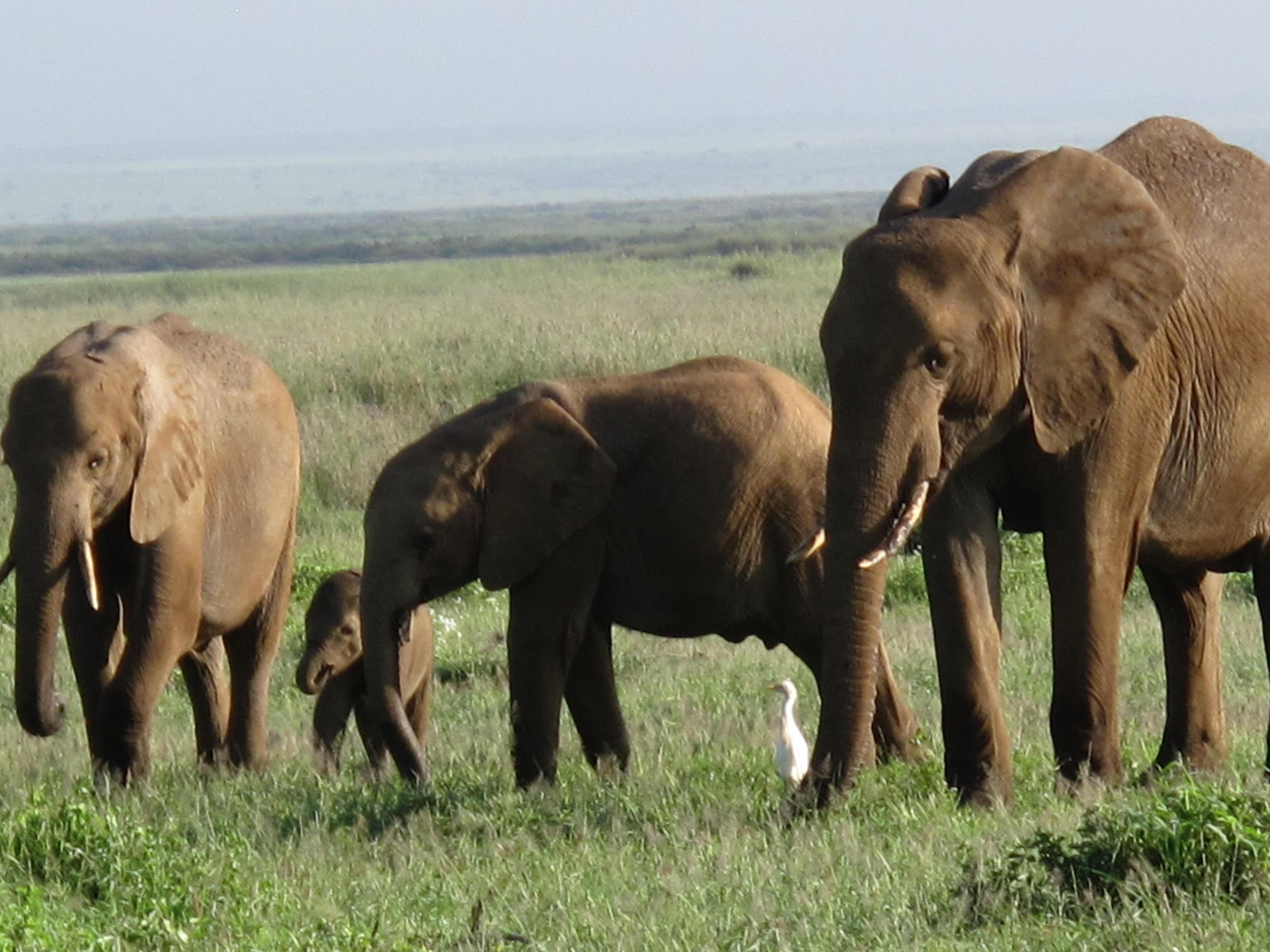 初めてのアフリカ旅行。ケニアでサファリ体験!ビザは必要?   たびこふれ