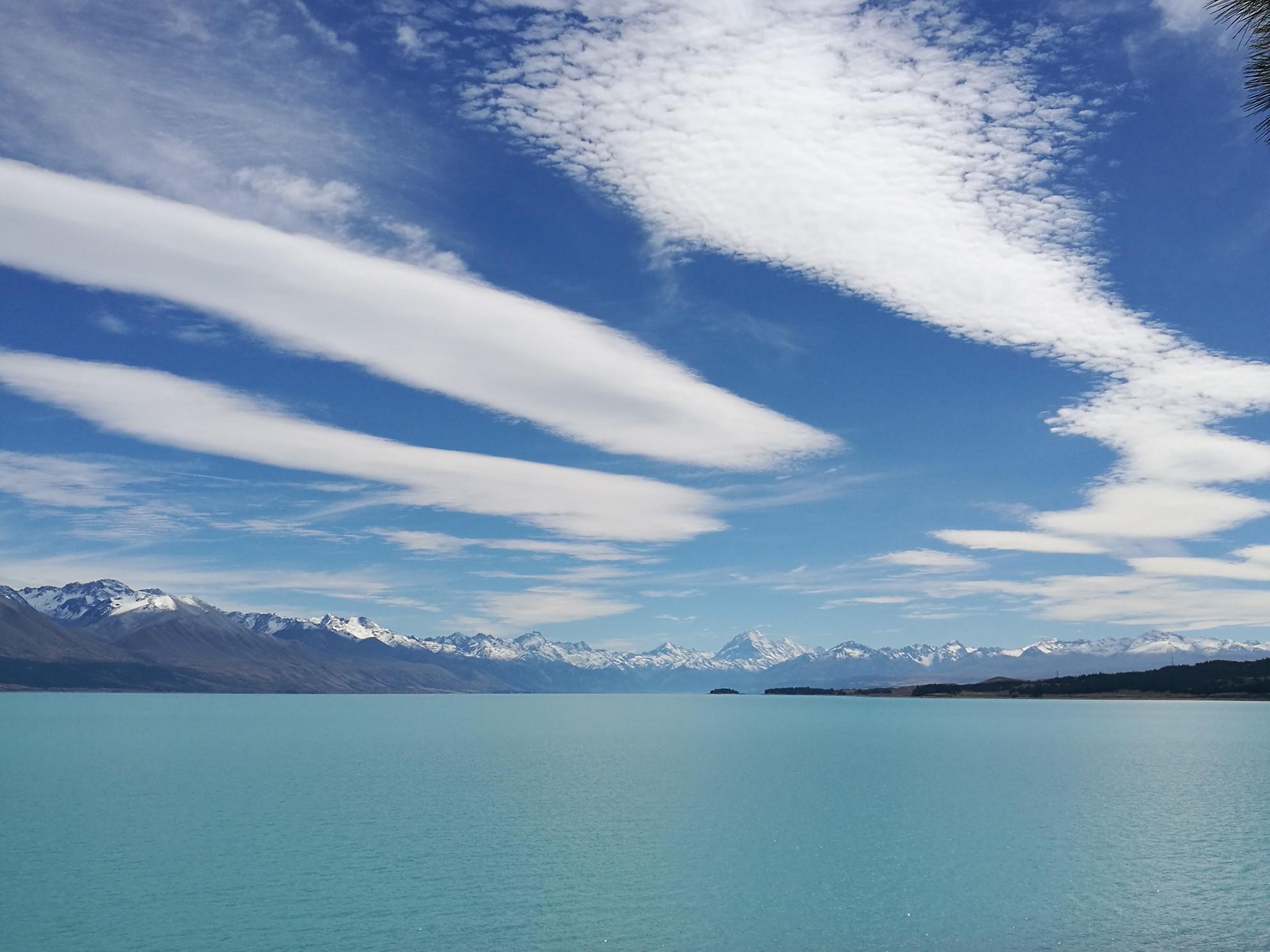 ニュージーランド神秘の湖「プカキ湖」で絶品キングサーモンを頂きました!   たびこふれ